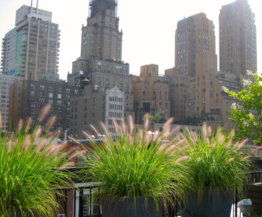 Urbanscape gardens, rooftop decks and terraces with great cityscape views.