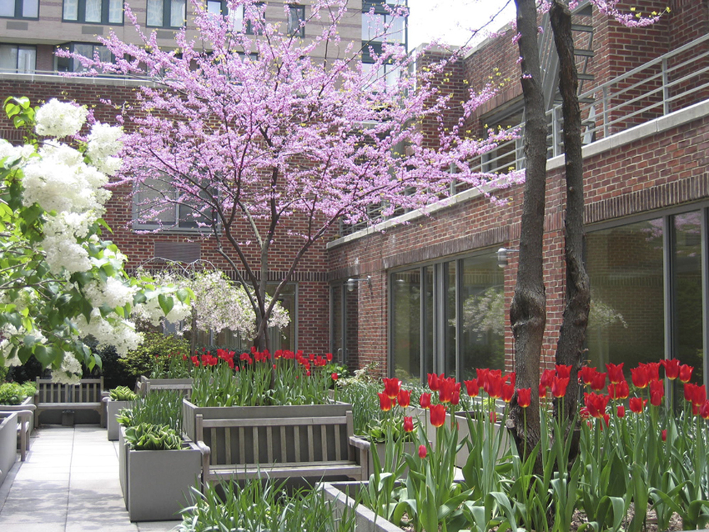 A springtime planting of tulips and flowers in a common garden in new york city